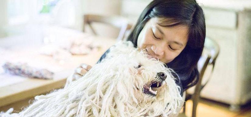 Beast | Mark Zukerberg's Puli (Hungarian Sheepdog)