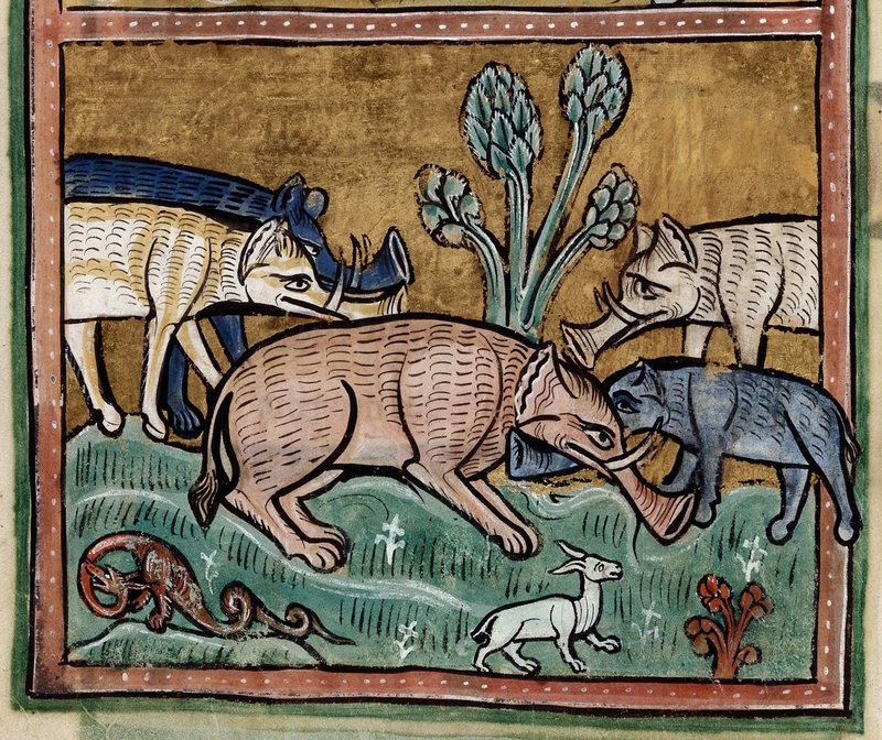 Elephants in a 13th century manuscript.  THE BRITISH LIBRARY/ROYAL 12 F XIII