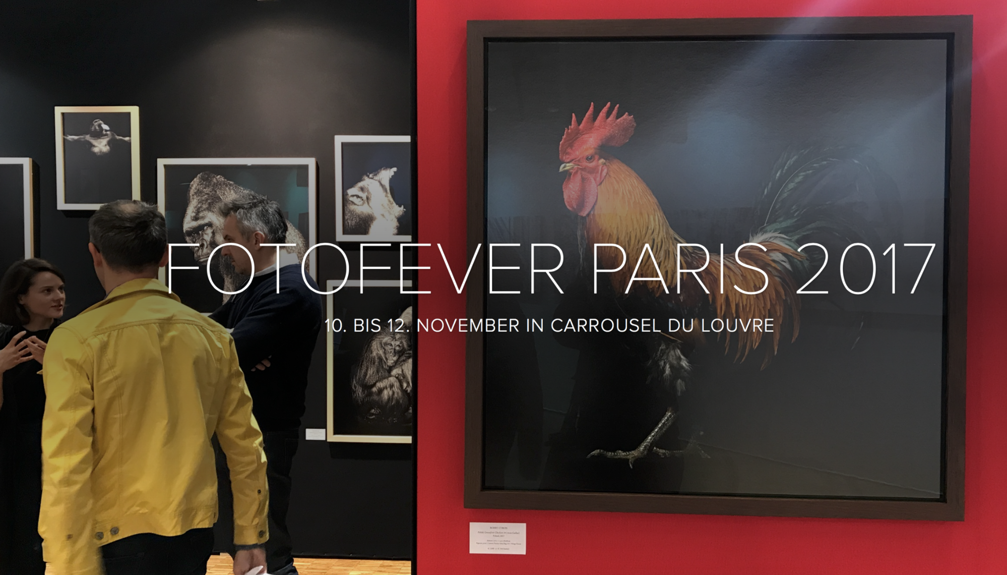 Fotofever Paris - Nadja Gusenbauer