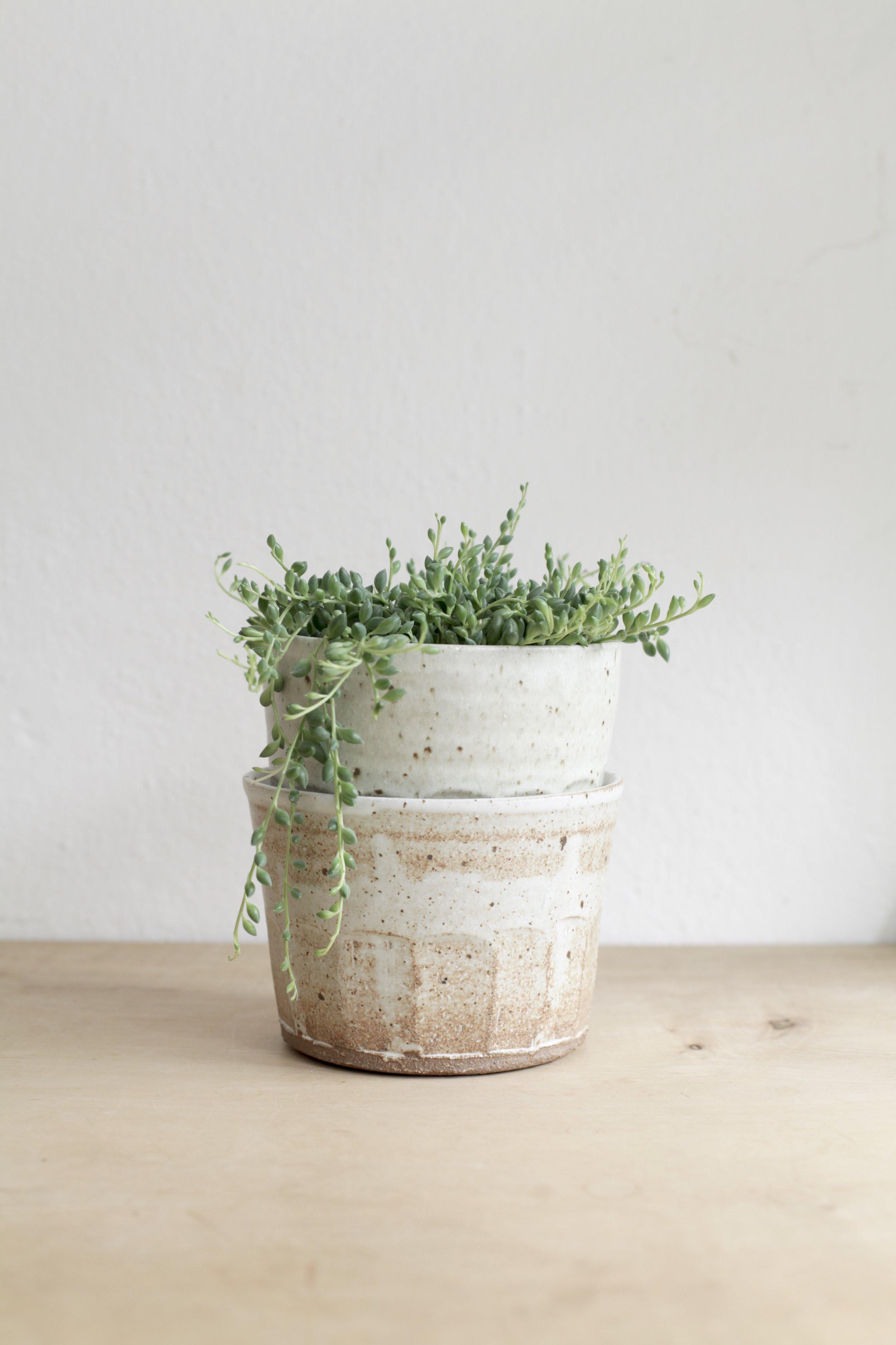 Shop - Botanical wares