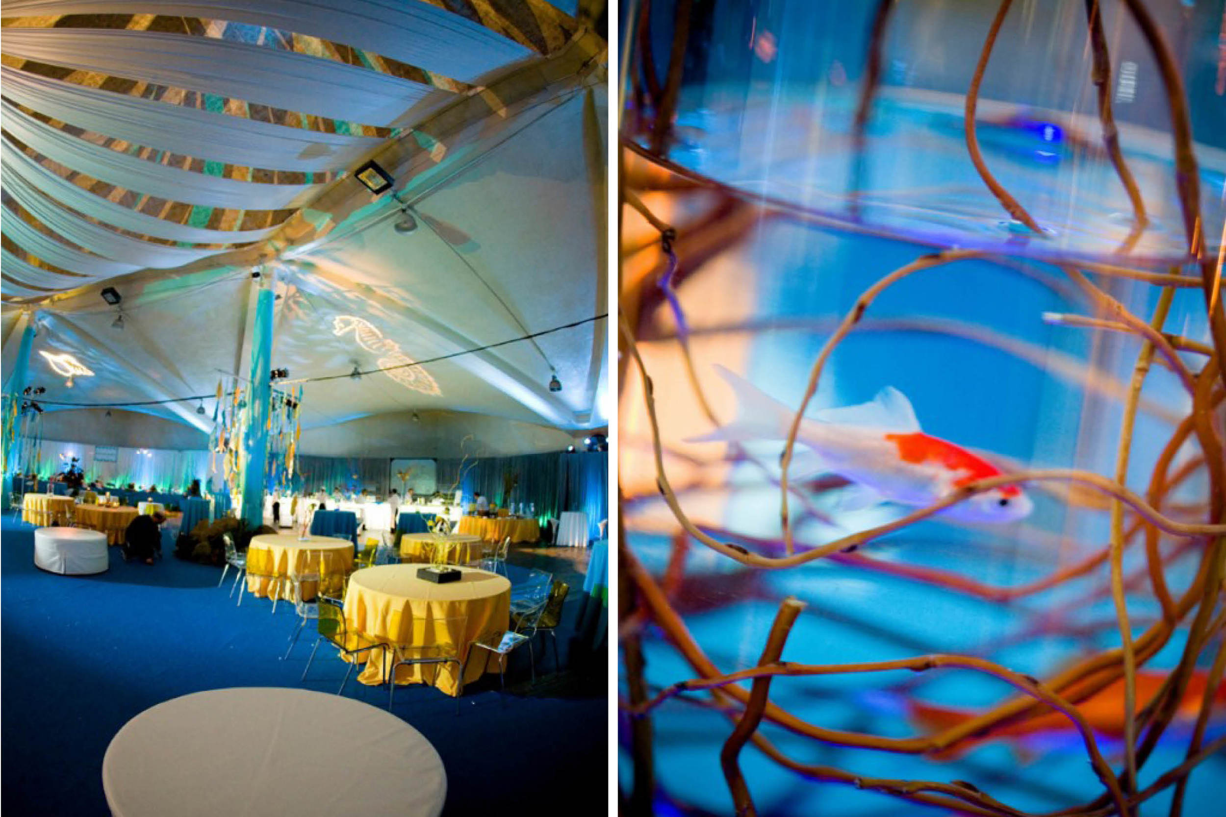 abd-meetings-events-alegria-by-design-corporate-santa-barbara-under-the-sea (4).jpg
