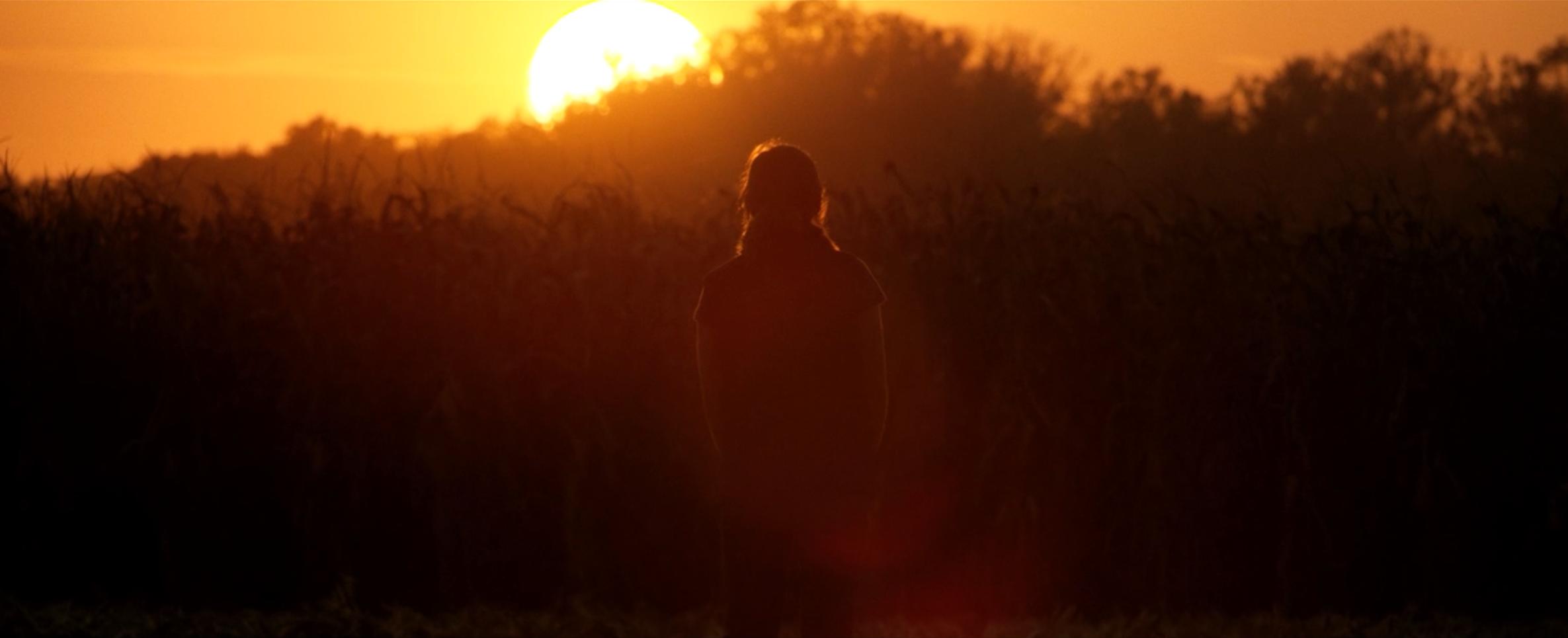 BULLTHISTLE_SunsetCornFields.jpg