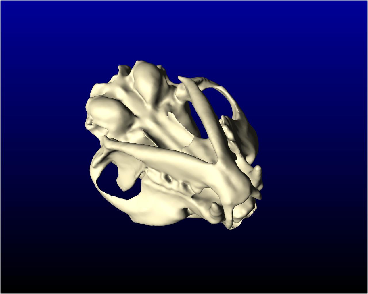 cat_skull_004.jpg