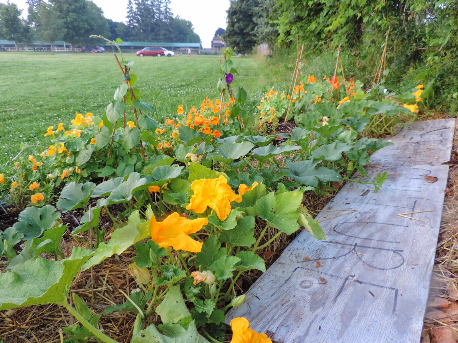 Permaculture Plank in Front Bed.jpg