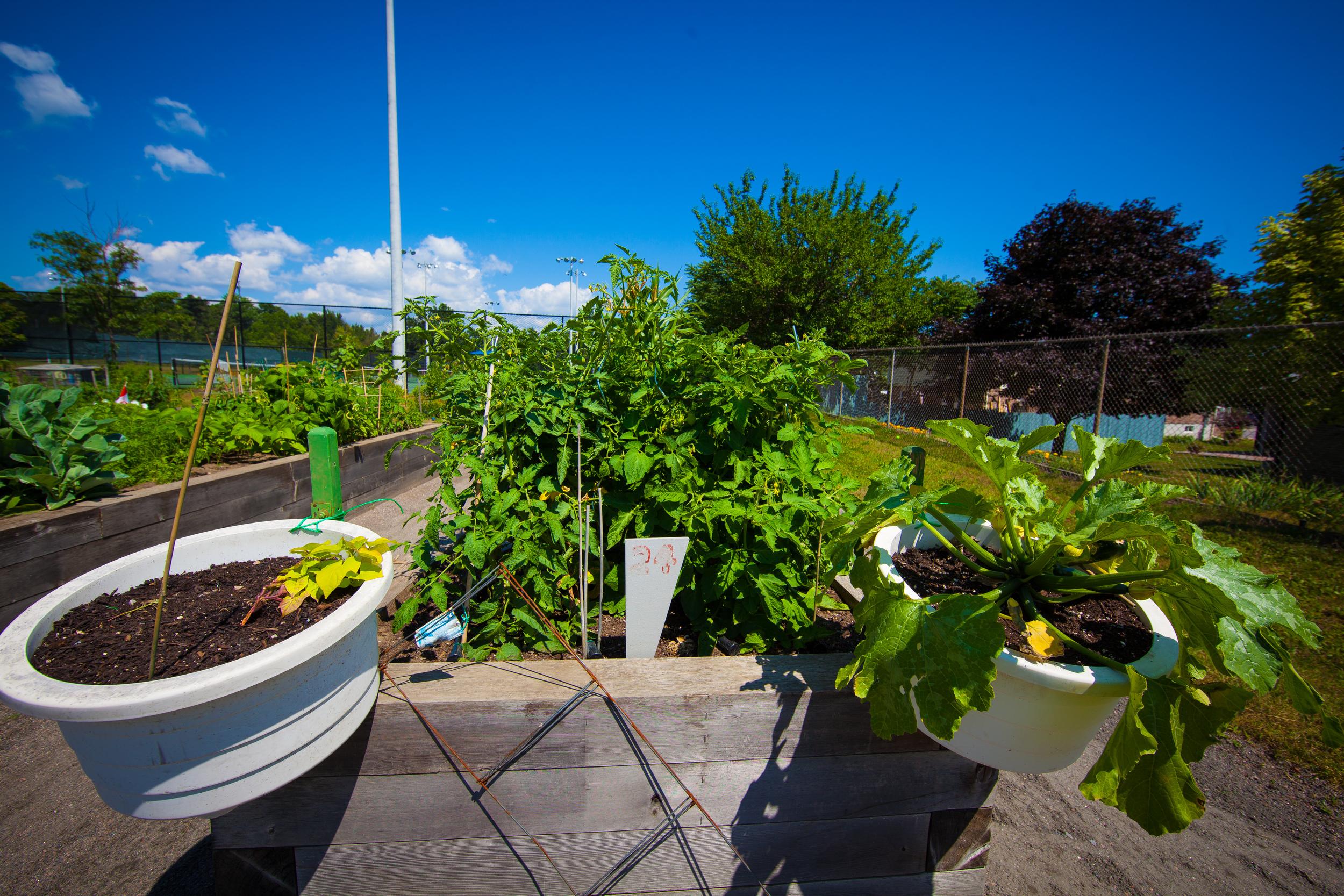 GardenTour2015-52.jpg
