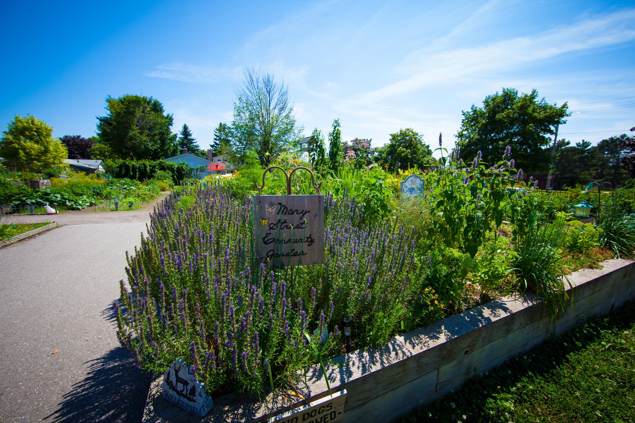 GardenTour2015-56.jpg