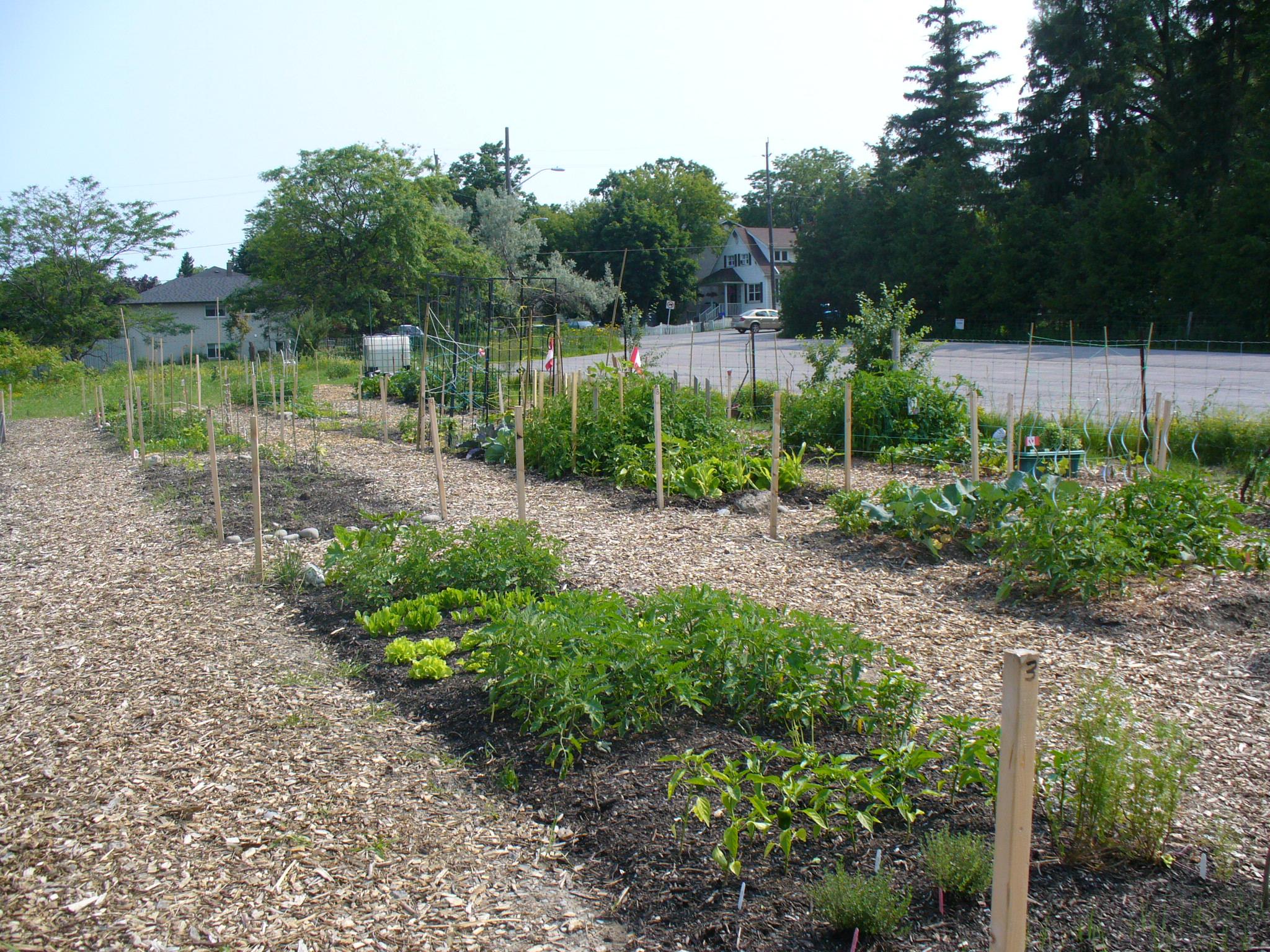 July 1st Garden.JPG