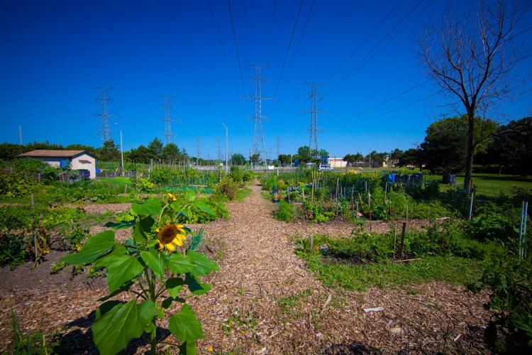 GardenTour2015-11.jpg