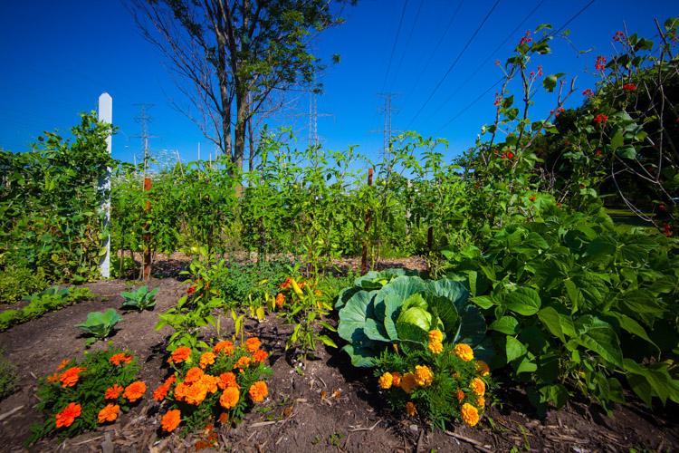 GardenTour2015-10.jpg