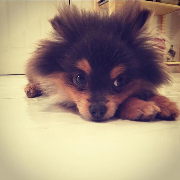 Natalie's new puppy, King.