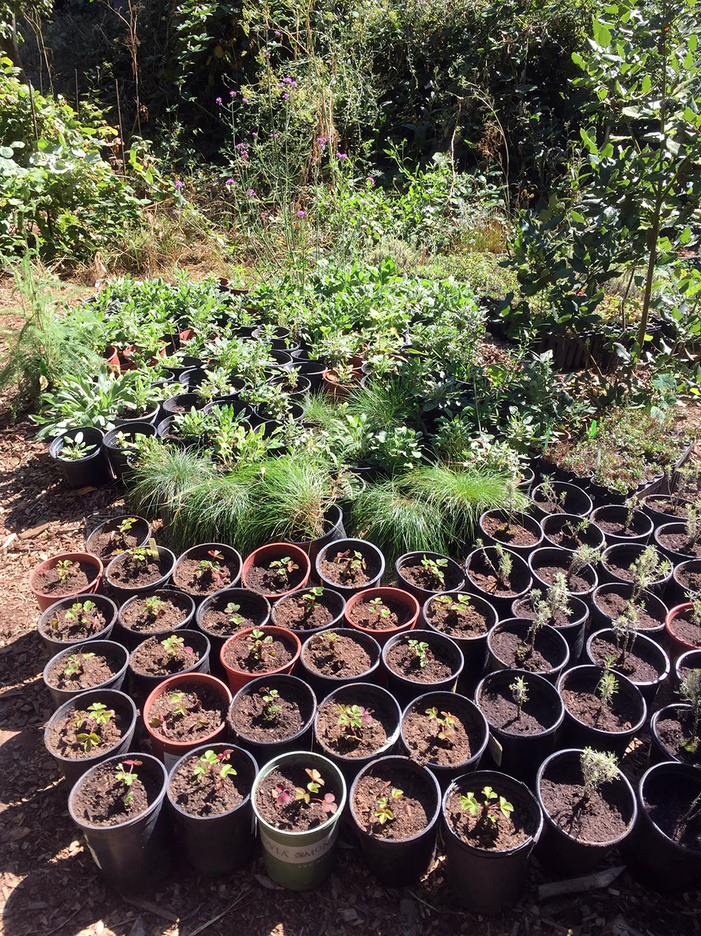 Backyard Nursery Network