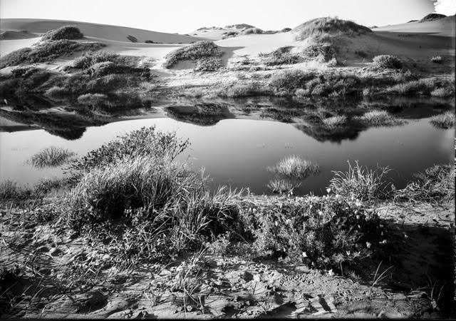 Interdune freshwater pond in the Sunset District near the present site of Sunset Boulevard looking west, 1910c. Image from original glass negative. Willard Worden photographer.