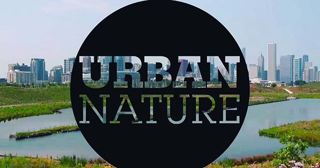 Check out the upcoming second season of WTTW Chicago's digital series, Urban Nature.  Nature in the City was featured in a previous episode! We cycled through San Francisco's habitat corridors, imagining a world in which cars share the road with birds, bees, butterflies, and bicyclists.  Watch here: https://interactive.wttw.com/urbannature/wild-plan-san-francisco#!