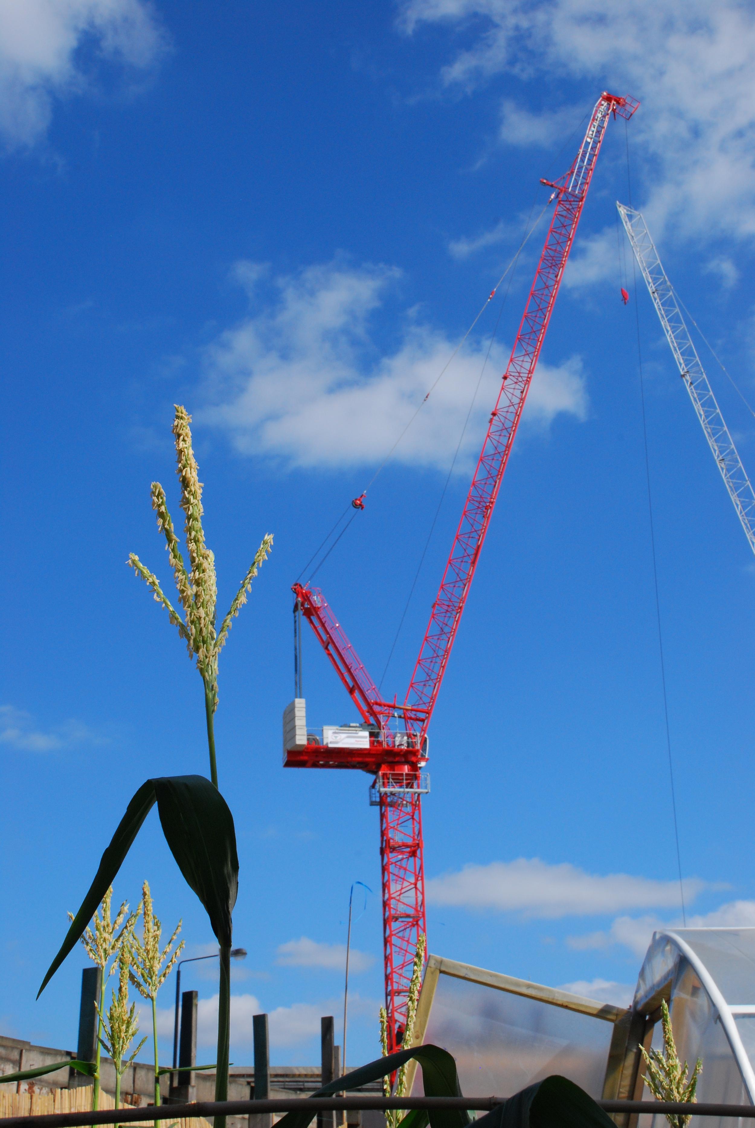 Crane-and-Grain-Photo-IC-Works.JPG