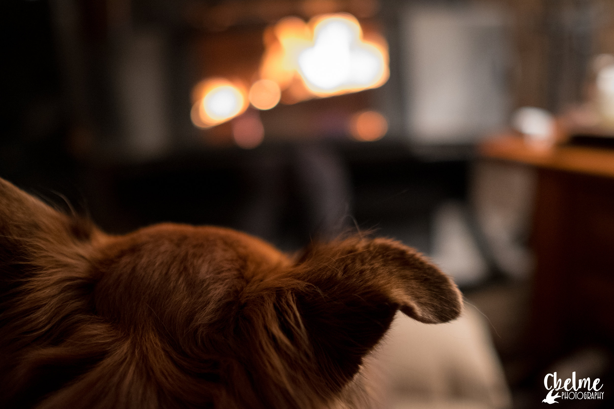 Russ Pup warming up by the fire - Tabernash, CO