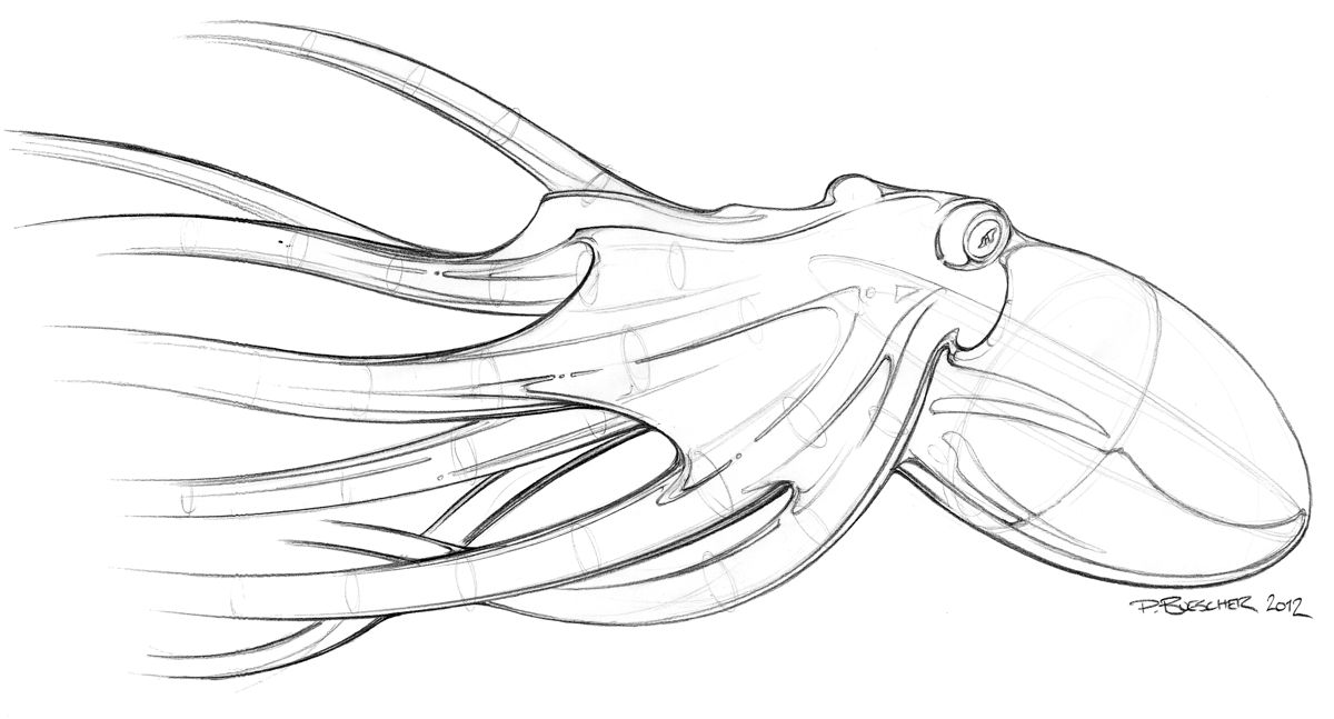 octopus sketch edit.jpg