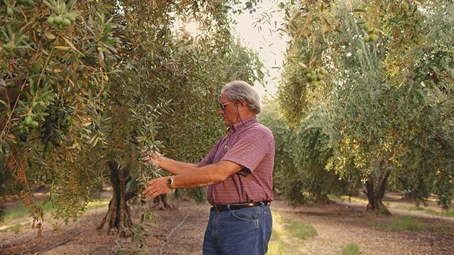 Olives Still 04 Thumbnail 07.jpg