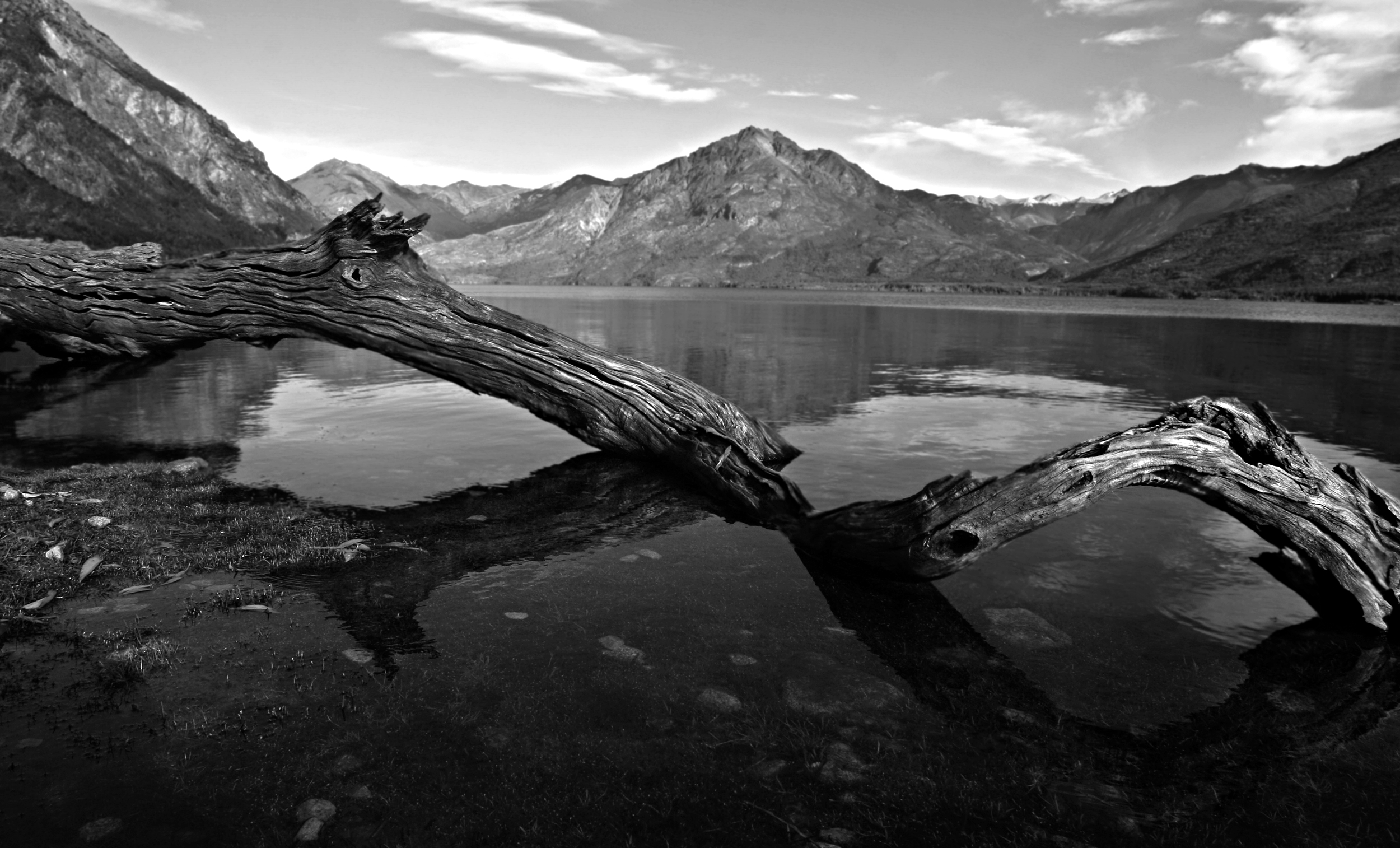 logwaterbw.jpg