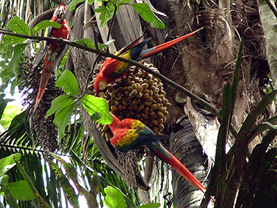 400x300_CAM_Ithmus_Day-5-Corcovado_National_Park.png