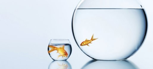 The cliché is being a big fish in a small pond, but neither podcasting nor  history podcasting  can be categorised as a small pond by any stretch of the imagination. It's a big world out there, and you'll have to work hard if you wanna stand out!