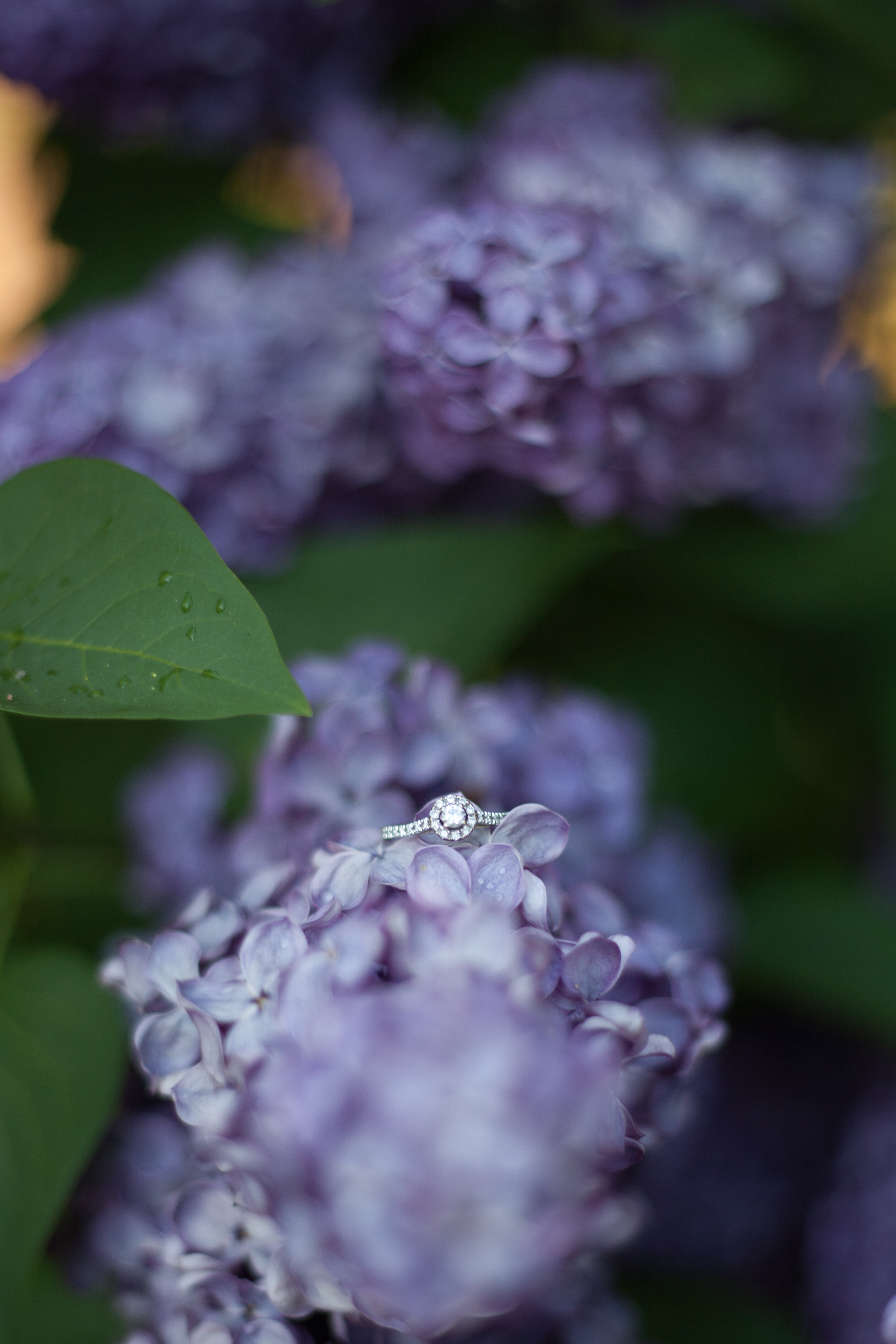 Jasmine&Chris Engagement-34.jpg