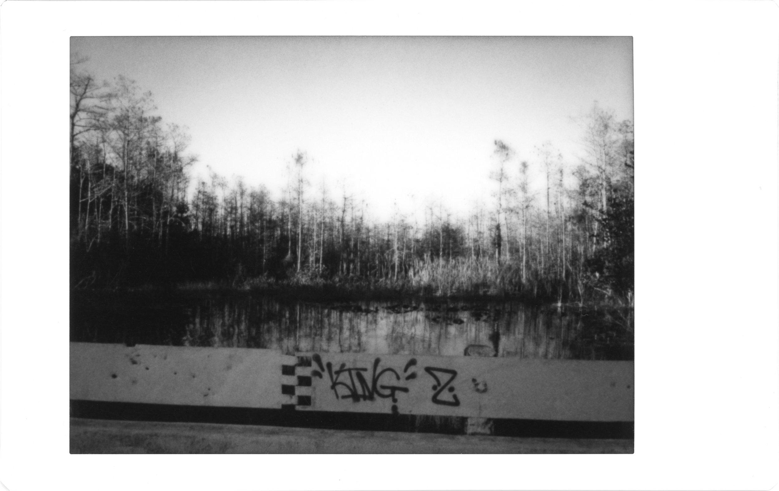 swampvista.jpg