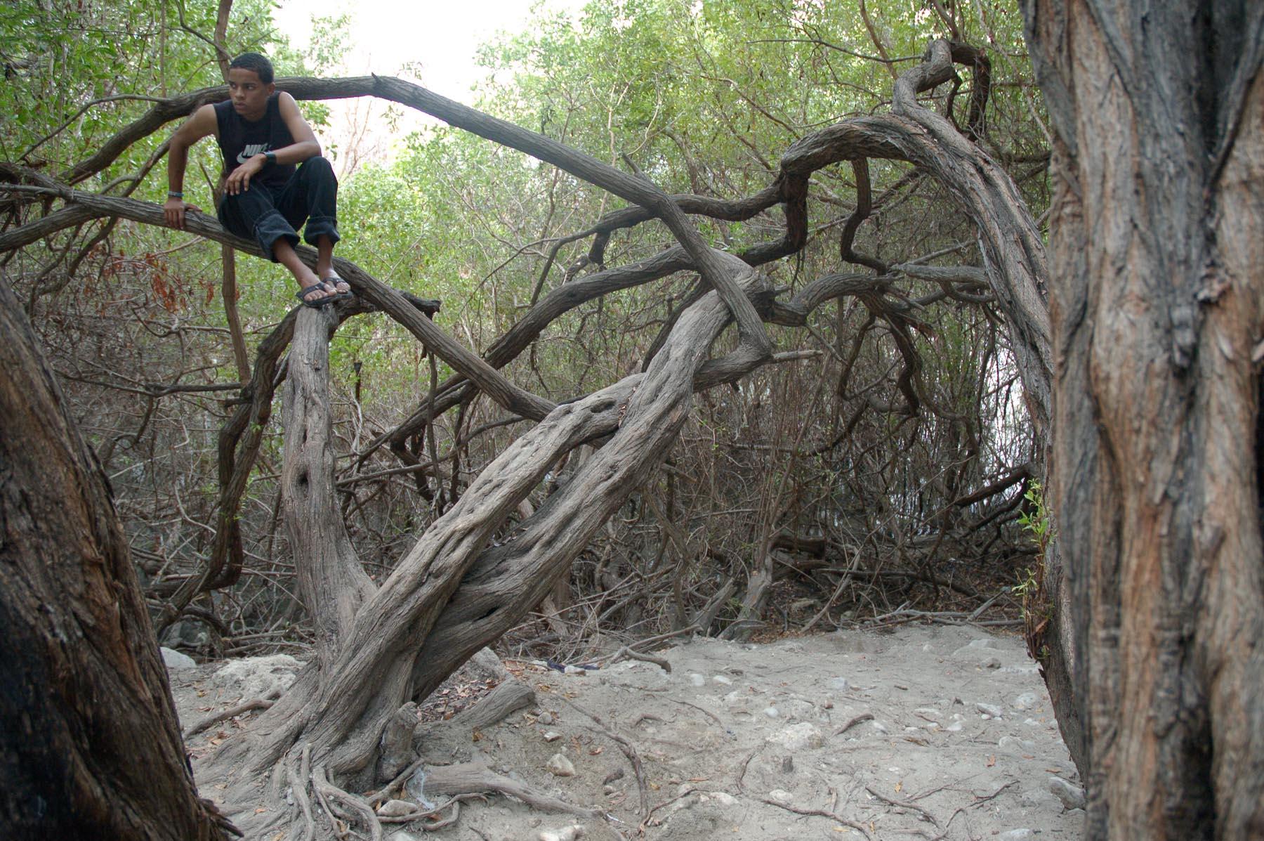 Boy in Tree, 2006. Lago Enriquillo, Bahoruco, R.D.