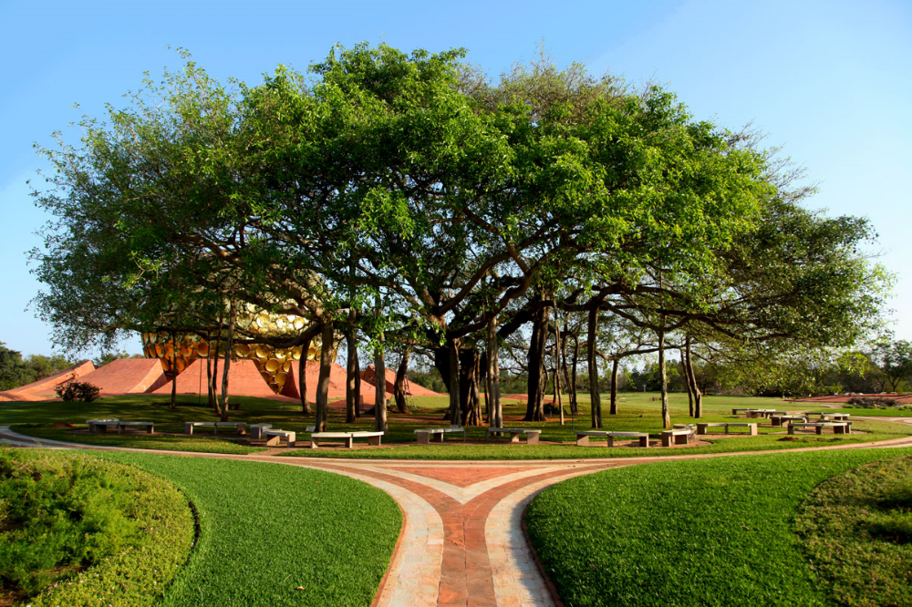 An unpruned banyan tree can grow indefinitely. This one at Auroville, Tamil Nādu, may one day surpass the massive one at the Theosophical Society. Click to expand.