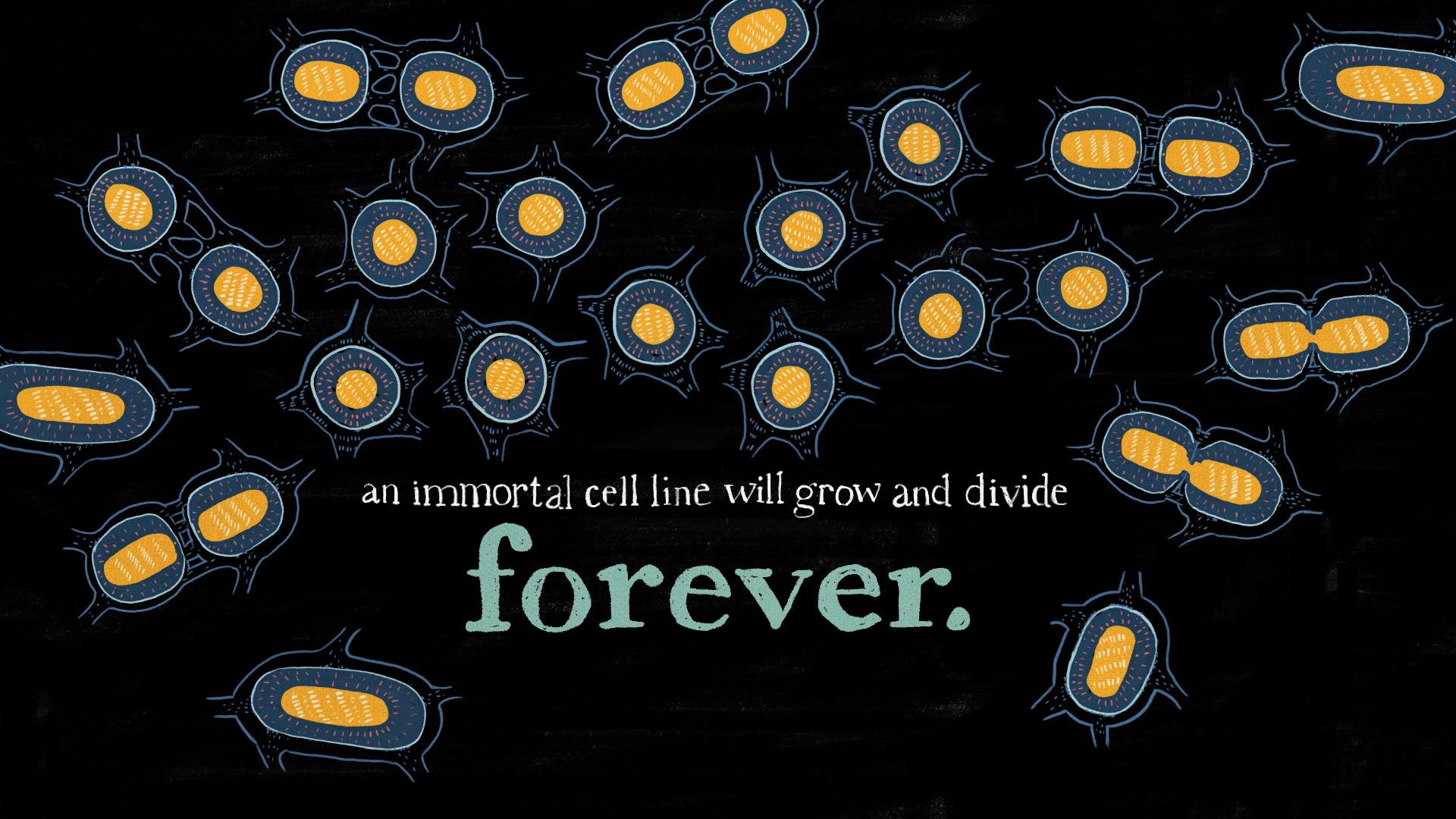 02_cells.jpg