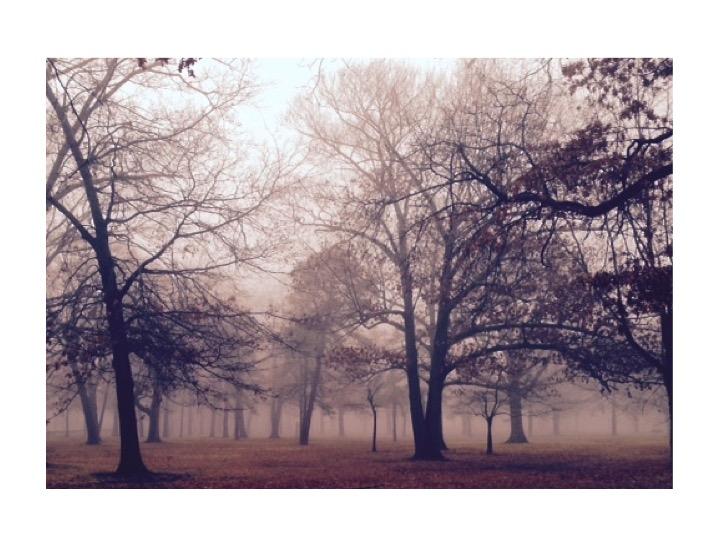 Joanna Stuart Nature E Rock trees in fog.jpg