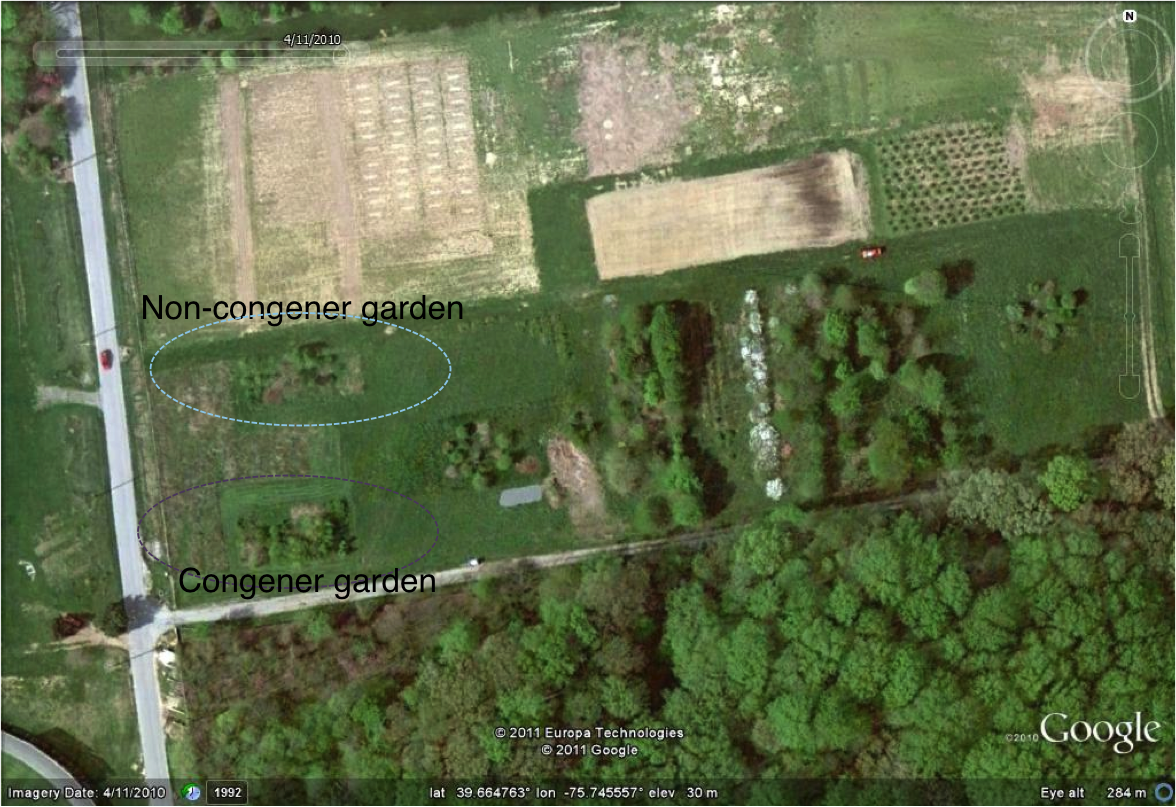 Aerial shot of the common garden planted at the University of Delaware.