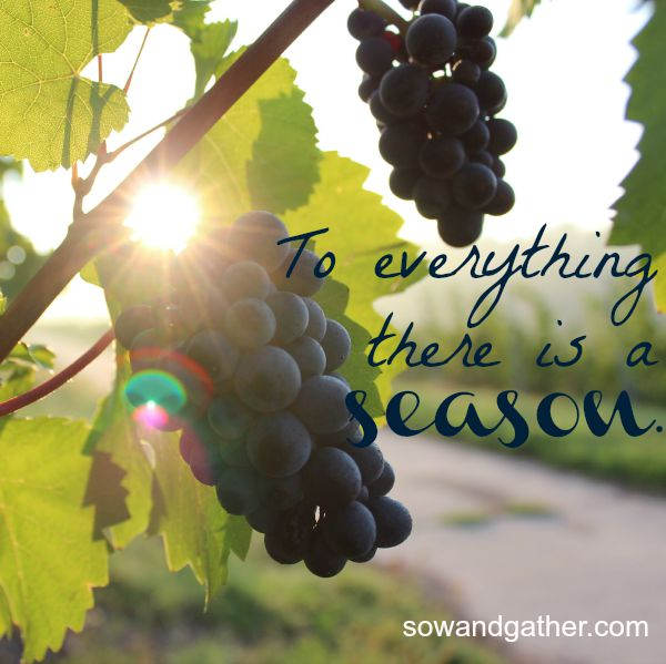 to-everything-there-is-a-season-sowandgather