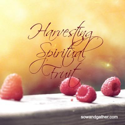 harvesting-spiritual-fruit-sowandgather.com