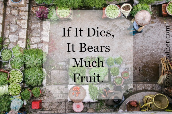 if-it-dies-it-bears-much-fruit #sowandgather #transformation
