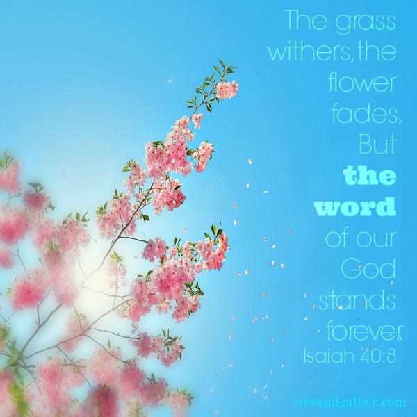 #sowandgather the word of God stands forever Isaiah 40:8