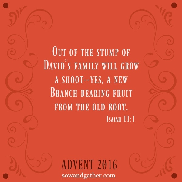 #advent Out of the stump of David's family will grow a shoot. Yes a new Brance bearing fruit from the old root. Isaiah 11:1