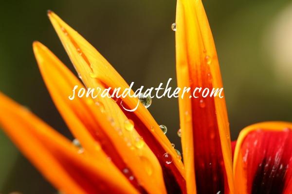 orange flower sowandgather.jpg