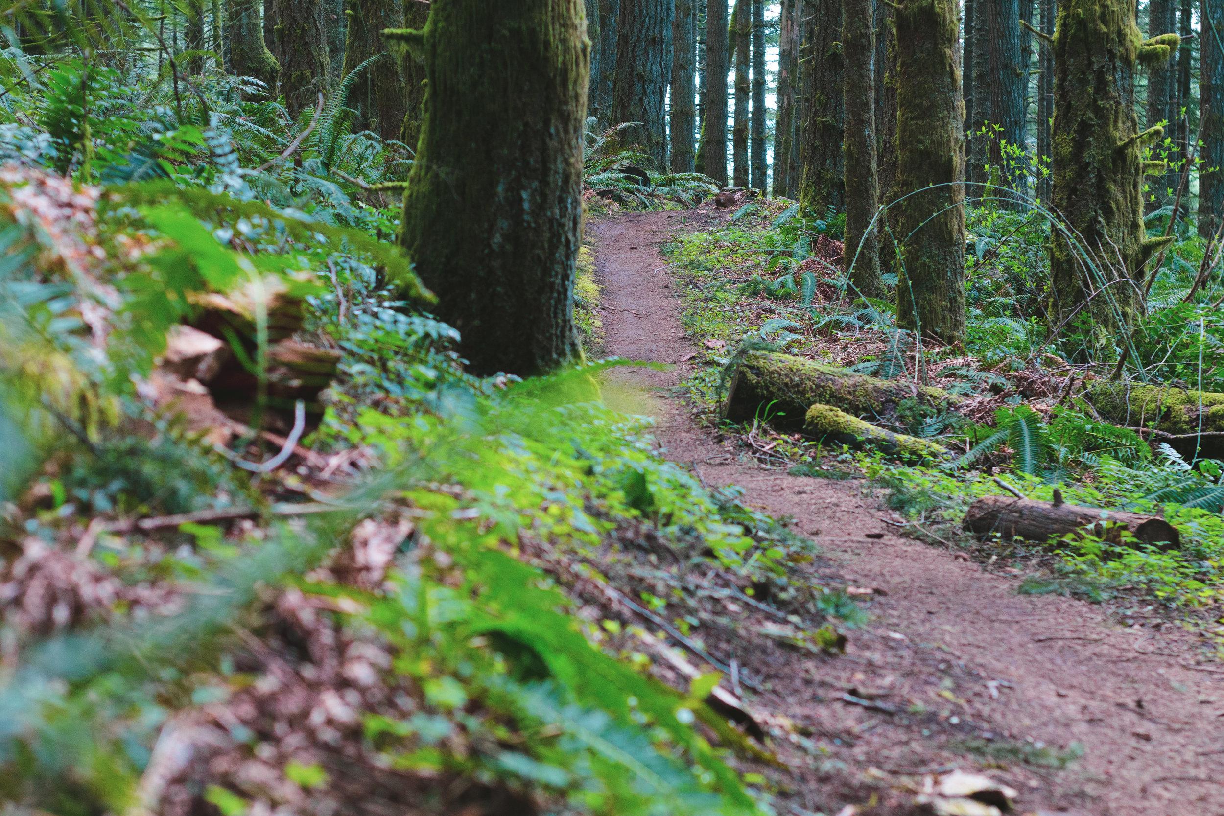 trail (1 of 1)-12.jpg