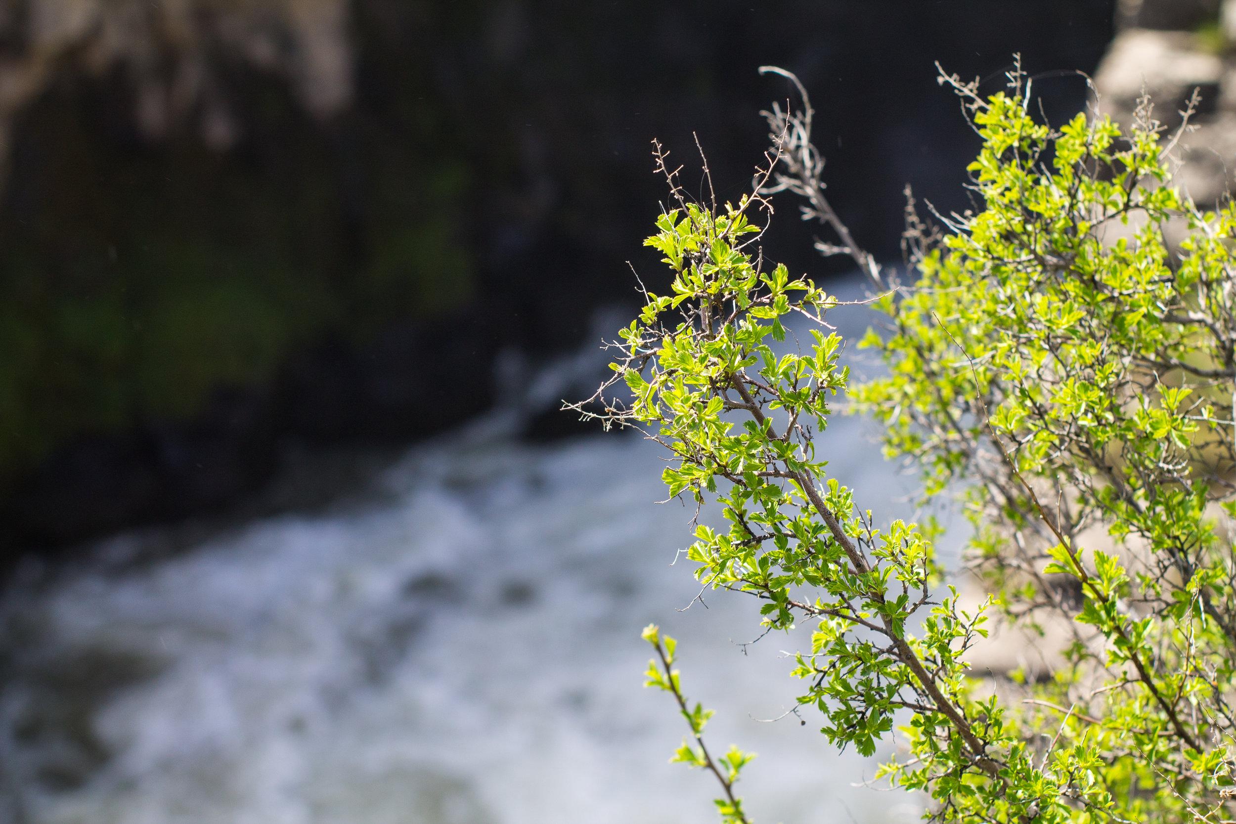 waterfall (1 of 1)-6.jpg