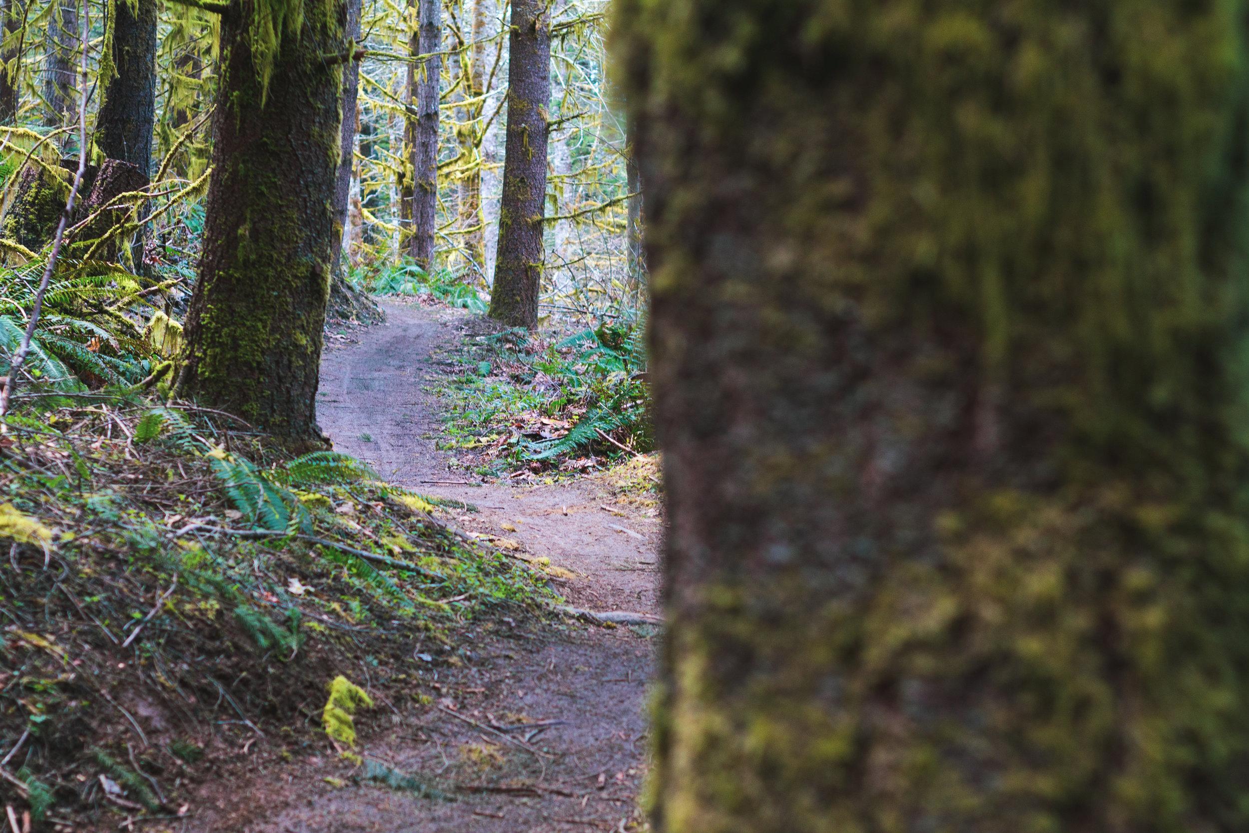 trail (1 of 1)-4.jpg
