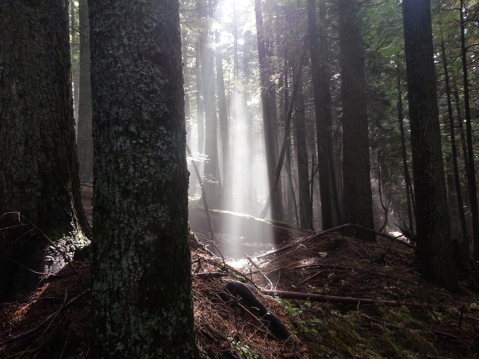 Rattlesnake Ridge trees cr Jill Yotz, 2014