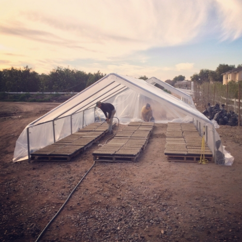 Temporary Greenhouses