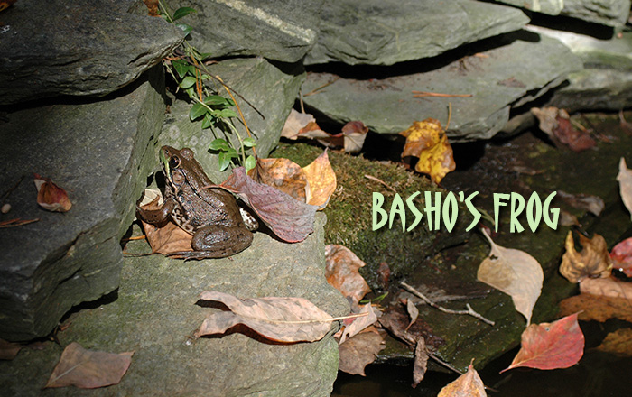 HC Episode 2: Basho's Frog. Photo by Donna Beaver