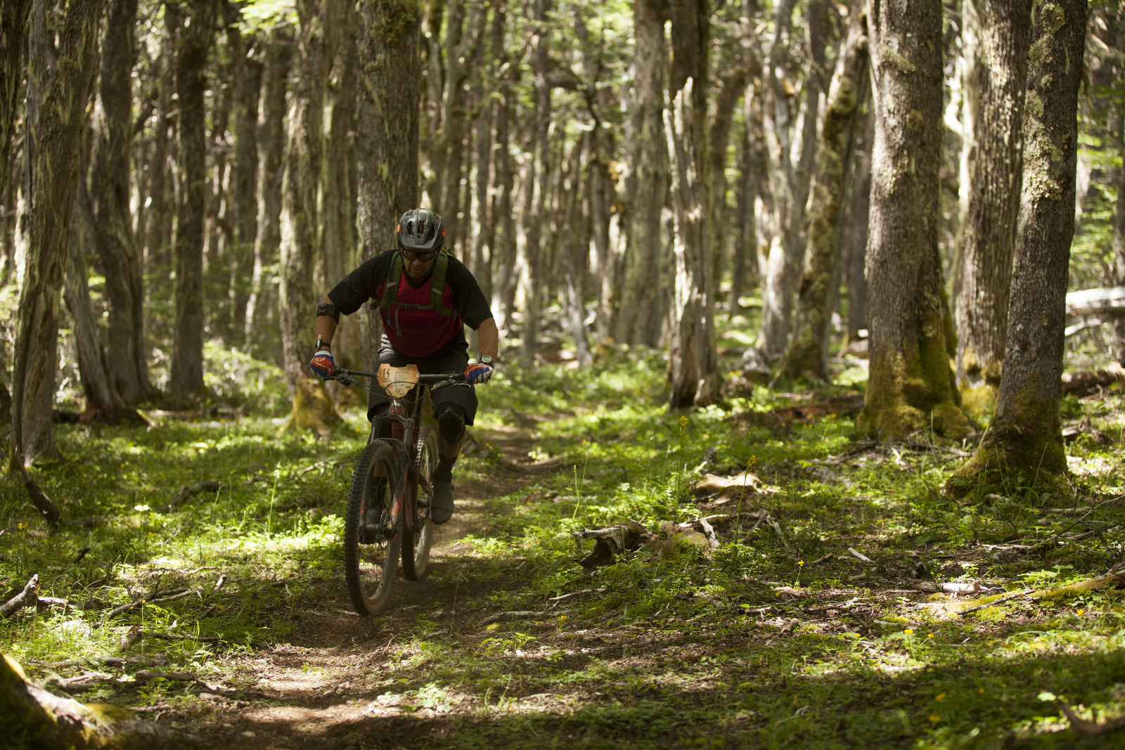 The forested singletrack we rode was amazing. Most of it had been cut in just days previously,ready for us to get the first rubber down.