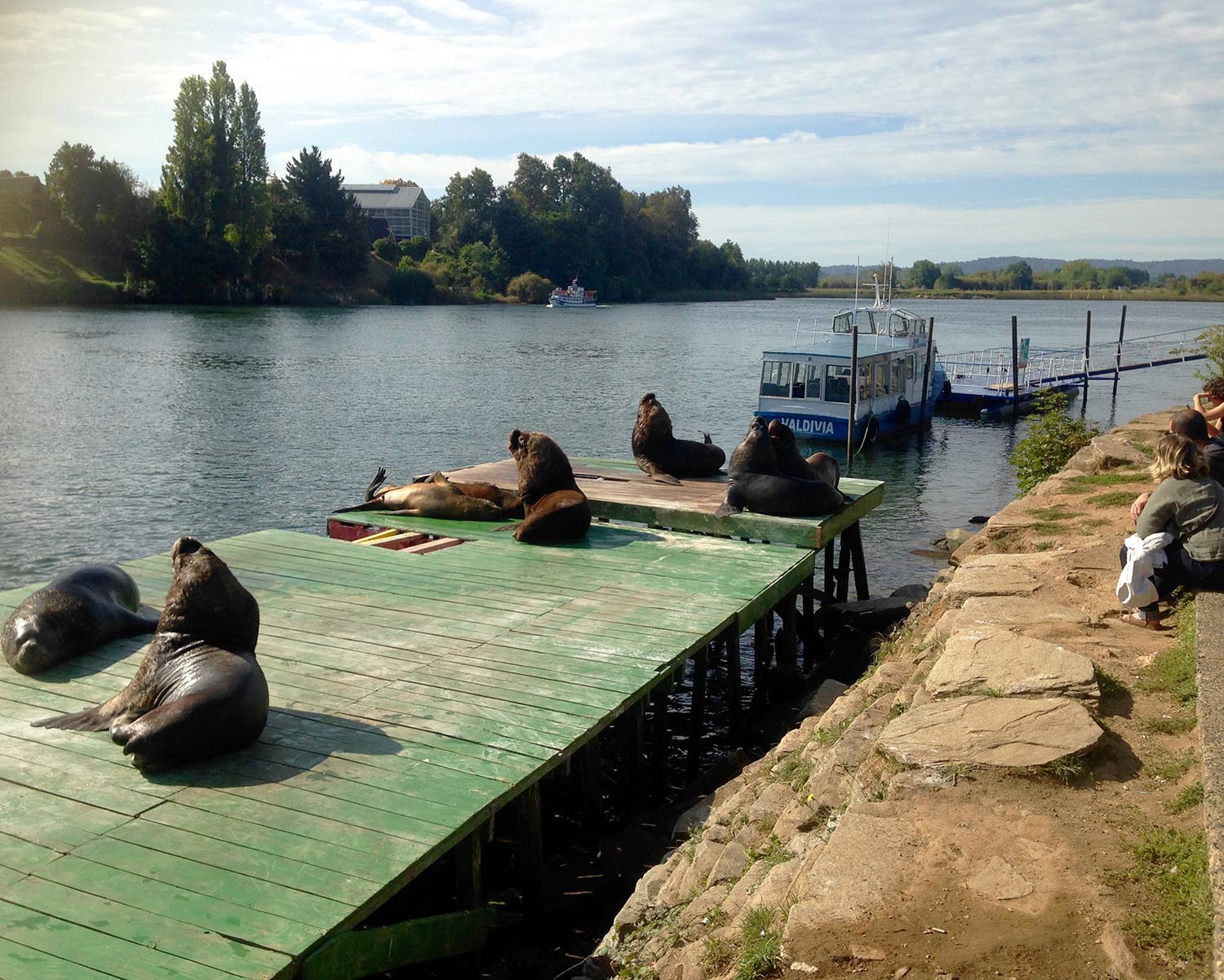 Sea lions sunning themselves on the Barges