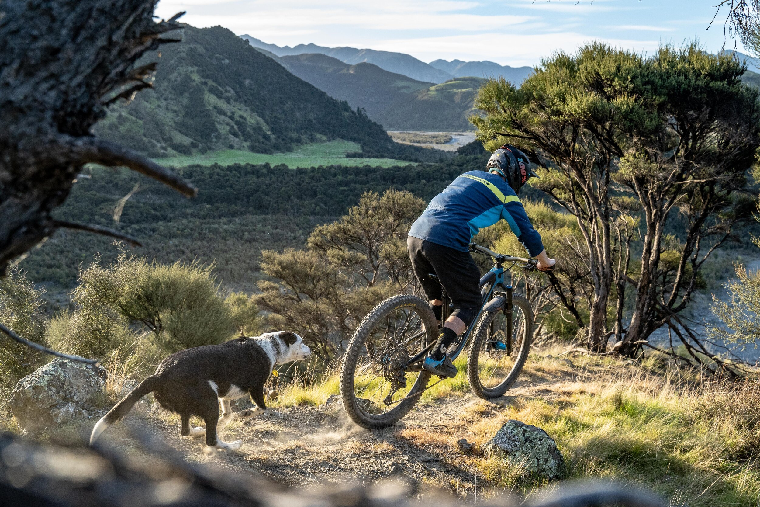 Paua the trail dog is always up for another run. Photo: Michael Hayward.