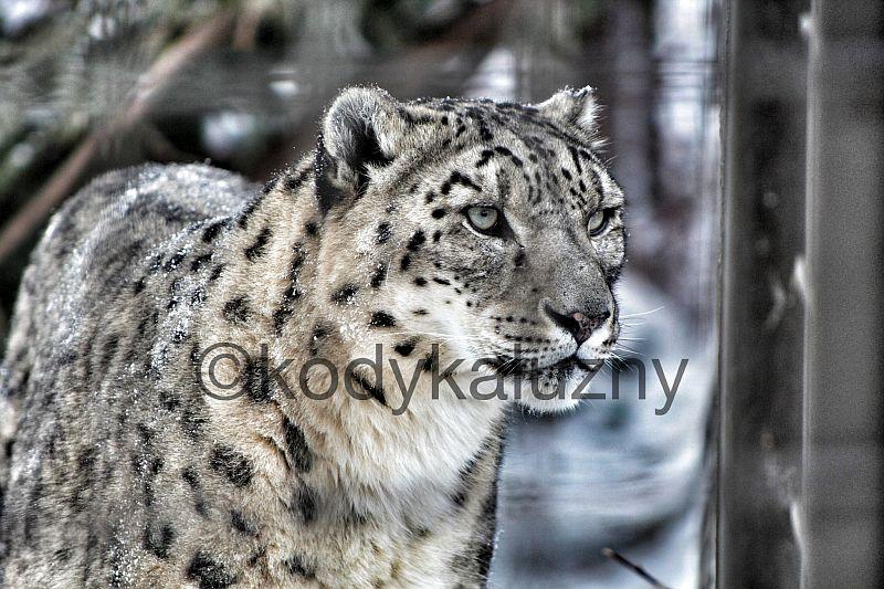 Snow Kitty!!! Right Meow! by Kody K.