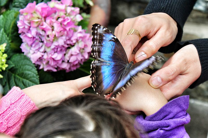 DON'T TOUCH THE BUTTERFLIES by Kody K.