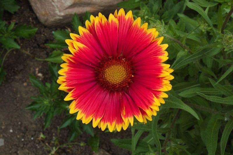 Pretty Flower by Kody K.