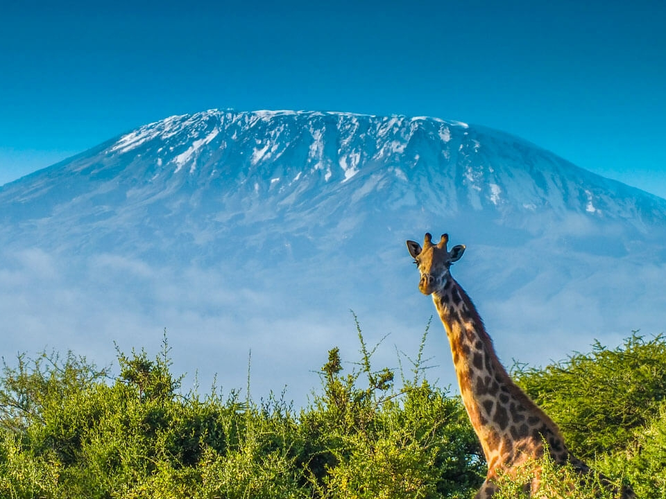 kilimanjaro - We take the Lomosho Route up the worlds tallest free-standing mountain, Mt Kilimanjaro. 5895m above sea level, 'Kili' looks over the African Sahara. Words simply can't describe the elation and euphoria felt whilst climbing Kili.